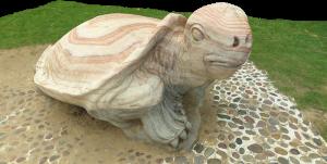 Turtle in Tuen Mun Park