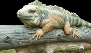 Big Lizard in Tuen Mun Park