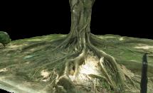 Tuen Mun Park – Tree 1754
