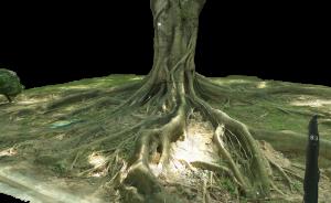 Ficus Microcarpa - Chinese Banyan - T1754